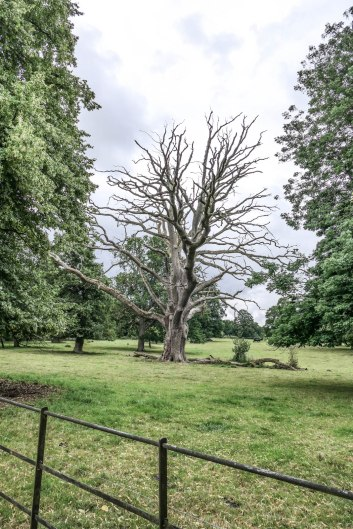 NT_The_Vyne_15July2020-41