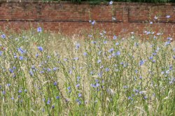 NT_The_Vyne_15July2020-72