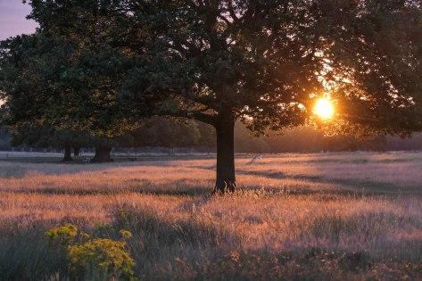 Richmond_Park_13July2020-11