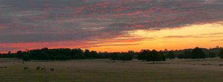 Richmond_Park_13July2020-5