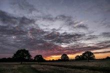 Richmond_Park_13July2020-7